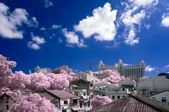 20160619-DSCF1710 (dcoloane) Tags: landscape fujifilm macau taipa b03 xe1 nkir ir720 xc1660