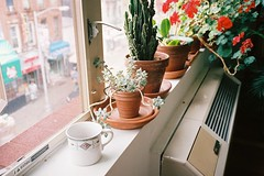 nyc (courtonfilm) Tags: windowsill spring summer cactus succulent 35mm filmphotography
