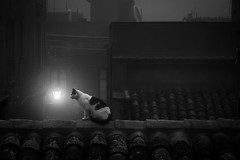 Cat on Roof - BW (hzeta) Tags: cat roof gato sobre el techo tejado tejas tileroof tiles tile lantern farol light luz atmosphere atmosfera for niebla neblina mist black white blanco y negro bw bn
