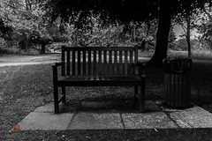 alone (Ntino Photography) Tags: park uk trees blackandwhite monochrome bench alone outdoor moderntimes sigma1020mm etoncollege carbagecan canon600d