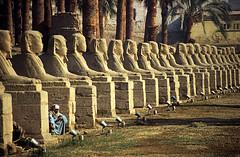gypten 1999 (243) Tempel von Luxor: Sphingen-Allee (Rdiger Stehn) Tags: menschen leute afrika gypten egypt nordafrika 1999 winter urlaub dia analogfilm scan slide 1990er 1990s obergypten sdgypten aad diapositivfilm analog kbfilm kleinbild canoscan8800f canoneos500n 35mm luxor misr  tempelanlage historischesbauwerk altgypten archologie archologischefundsttte altertum antike tempelvonluxor luxortempel tempel sakralbau bauwerk unescowelterbe welterbe unescoweltkulturerbe weltkulturerbe gyptologie sphinx sphinxallee statue sphingenallee