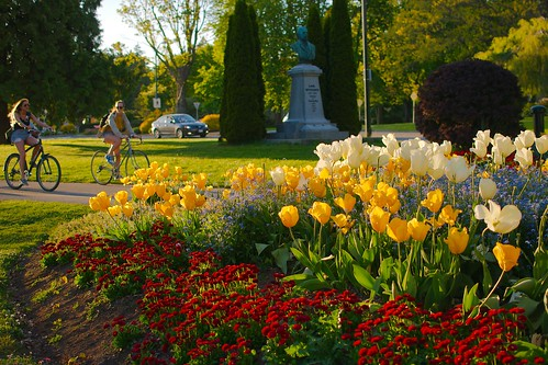 Cyclimse sur fleurs