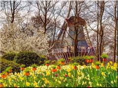 Spring in Keukenhof / Holland (Ostseetroll) Tags: flowers holland windmill spring nederland blumen netherland frühling niederlande keukenhof windmühle olympuse620