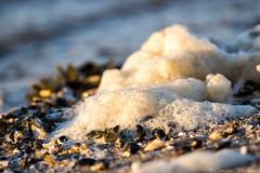 Foam on the Beach (Jan v B) Tags: sunset shells beach zonsondergang nederland foam schelpen ouddorp goeree zuidholland goereeoverflakkee flakkee brouwersdam