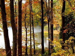 Autumn at the Pond (David Hoffman '41) Tags: nature landscape scenery pond season autumn fall trees leaves transformation change rural farm country charlottecourthouse charlottecounty virginia woods water lake