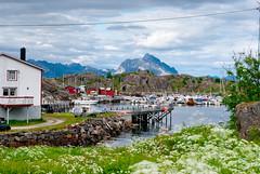 Stamsund - Lofoten (Vincenzo Bevivino) Tags: norway norge north lofoten norvegia nord stockfish codfish baccal circolopolareartico stoccafisso