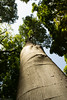 Sky tree (Gülhane parki / ISTANBUL) (www.utkupekli.com) Tags: summer sky cloud tree green nature canon perspective trunk tronc perspectiv 18135 60d