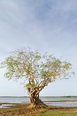 Weerawila (Mark Sekuur) Tags: park wild lake tree animals nationalpark meer safari srilanka ceylon yala wortels velegezichten
