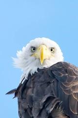Mom on the Edge (foresterbonie) Tags: bird bc baldeagle vancouverisland campbellriver birdwatcher originalfilter uploaded:by=flickrmobile flickriosapp:filter=original