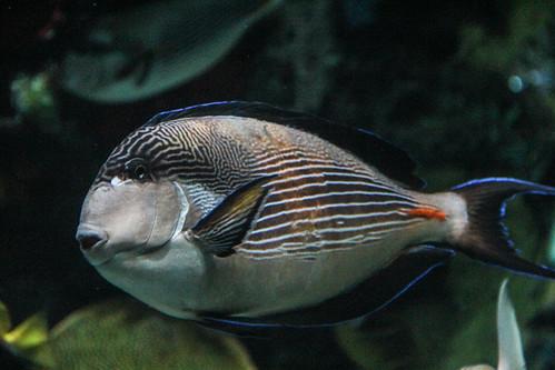 Thumbnail from Ripley's Aquarium
