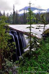 1-DSC_9186 (perdov) Tags: canada jasper stirling waterfalls alberta athabascafalls jasperalberta 2013 bowvalleyparkway1a perrydovell dovelldigitalphotography