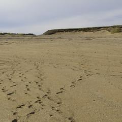 Beach Sand (Guruinn) Tags: beach strand sand september reykjavík nauthólsvík gul strönd gulur gult sandur 2013