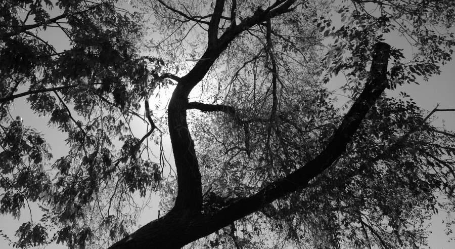 Деревья за оградой в/ч 88759