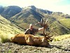 New Zealand Red Stag Hunting - Christchurch 39