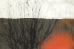 PA190283  (alubavin) Tags: street autumn digital pen lens olympus manual helios ep3 442