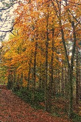Woodland scene (35mmMan) Tags: cameraphone autumn trees fall nature leaves forest woodland sketch woods sony smartphone hatfieldpark xperia xperiat