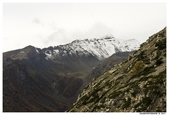 Parc des Ecrins L'Argentiere_2013 (Artiste/Photo) Tags: blue sky lake snow france montagne cow lumire meadow lac bleu ciel neige arbre d800 hautealpes natuure moutaine largentire parcdesecrins lumierre rivierre