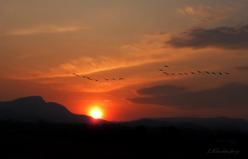 Sunrise with Geese flying