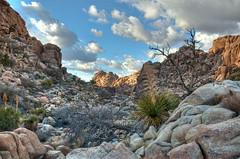 joshua-tree9 (jackwheeler) Tags: california park joshuatree national deserts hdr
