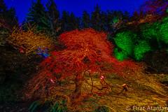 Fire (Ataman Photography) Tags: christmas canada night nikon holidays bc britishcolumbia tokina vancouverisland butchartgardens f28 sidney sunkengarden 1116 centralsaanich greatervictoria d5200 tokina1116mmf28 greatervictoriaregion