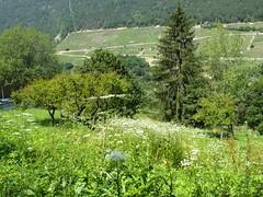 Orsieres - Martigny (12.07.13) 138 (rouilleralain) Tags: valais sembrancher valdentremont stbernardexpress bovernier viafrancigena