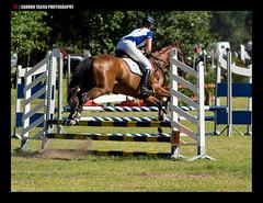 ALLE4291 (Sandro Tasso) Tags: horses cavalli olympus150mmf2 sandrotasso olympusomdem1