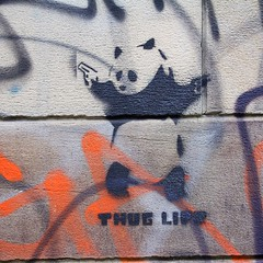 Image5241 [2014-03-02] (JAM Project) Tags: streetart art stencil panda sydney australia nsw 1750mm