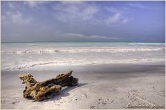 Non siamo ai Caraibi.... (leon.calmo) Tags: canon mare toscana smeraldo rosignanosolvay eos50d spiaggebianche leoncalmo
