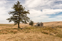 Dartmoor (~g@ry~ (clevedon-clarks)) Tags: tree cross farm nuns devon moors dartmoor northdevon nunscrossfarm