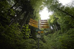Where do you want to go? (Taufan Gunarso) Tags: green nature landscape switzerland angle wide 14mm samyang sonyalpha99