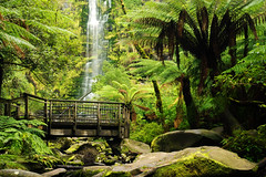 Lorne - Erskine Falls (Kokkai Ng) Tags: wood longexposure travel fern tree green tourism nature water rock forest waterfall rainforest platform scenic australia nobody landmark victoria lookout tropical greatoceanroad lorne naturallandmark erskinefalls placeofinterest