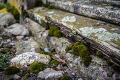 Old wood (wreckdiver1321) Tags: wood old out wooden moss montana growth nails worn weathered mossy dilapidated unused