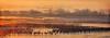 Sandhill Crane Migration, Platte River Sunrise (Passion4Nature) Tags: cold texture sunrise nebraska cranes migration sandhillcranes auduboncenter spectacle platteriver magicuniverse magicunicornverybest