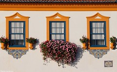 Sash windows and the beauty of Spring. (Behappyaveiro) Tags: flowers flores primavera spring europa oldhouse tiles aveiro azulejos rossio sardinheiras sashwindows bluewindows casaantiga janelasazuis janelasdeguilhotina