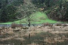 DSC02524-1 (sidelinesjr) Tags: pasture flooded wintercolors lincolncooregon