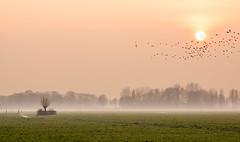 Afternoon Mood (genf) Tags: pink sunset sun mist green birds clouds zonsondergang groen mood sony meadow vogels wolken atmosphere pasture tele zon weiland amstel roze a77 ouderkerk tmt stemming