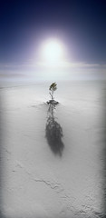 White infinity (Kari Siren) Tags: camera sun lake snow net mark panoramic horizon202