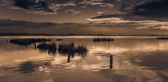 Golden Light, Ria de Aveiro (paulosilva3) Tags: world sunrise de landscape lee filters ria mistyc aveiro waterscape polariser tijosa