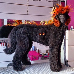 Berta Standard Poodle - Caniche Gigante (Peluquería Canina Nanuka Style) Tags: pets poodles dogs grooming poodle perros bestfriend standardpoodle doggys caniche groomers standardpoodles caniches peluqueriacanina iphoneography nanukastyle perrosbonitos lovepoodles