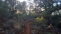 My Favorite Trail (Sedona Clearing House) Tags: trees arizona southwest nature forest landscape outdoors open path sedona hike trail highdesert