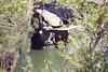 After the Jump (everyday sh⊙_☉ter) Tags: park beach forest sydney waterfalls kookaburra wattamolla garie royalnationalpark audley stanwell hackerriver