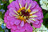 Good afternoon everybody (haidarism (Ahmed Alhaidari) Baaaack) Tags: hello flower nature smile rose afternoon good ngc salute laugh hi salam ورود زهرة السلام ابتسامة تفاؤل ضحكة
