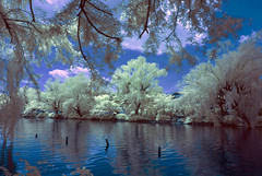 Shakuji Park Lake In Infrared Blue Tones (aeschylus18917) Tags: park trees lake reflection nature japan landscape ir tokyo pond nikon scenery surreal infrared   koen d200 nerima nerimaku  shakuji shakujikoen     shakujipark  1424mm 1424mmf28g danielruyle aeschylus18917 danruyle druyle   shakujiiken