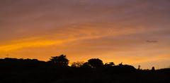 Orange Sky II (lpshikhar) Tags: sanfrancisco california street sunset summer portrait sky blackandwhite orange birds silhouette landscape photography scenic goldengatebridge baybridge bayarea