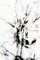 Eighth Disintegration (pni) Tags: tree suomi finland helsinki branch multipleexposure helsingfors tripleexposure multiexposure skrubu pni pekkanikrus