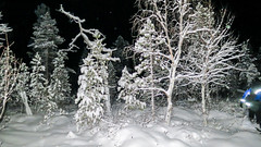 Snow trees at night (Mark Rainbird) Tags: canon finland inari lapland snowshoes powershots100 nellim wildernesshotel