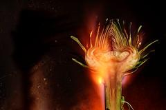 Satanic Artichoke (Apionid) Tags: fire surreal vegetable burning artichoke satanic evilgrin werehere nikond7000 hereios