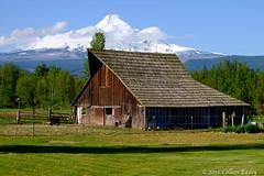 Barn near Hood River (Colleen Easley) Tags: barn landscape mthood columbiagorge hoodriver