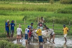 34_20160315-171412-_DSC5456 (trueforever) Tags: indonesia ibis bukittinggi padang novotel pagaruyung minangkabau jamgadang lembahharau westsumatera batusangkar tanahdatar ngaraisianok padangpanjang pacujawi padangpariaman