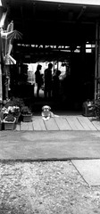 HOST AND GUEST (Dinasty_Oomae) Tags: blackandwhite bw monochrome cat blackwhite kodak outdoor chiba  retinette ichikawa